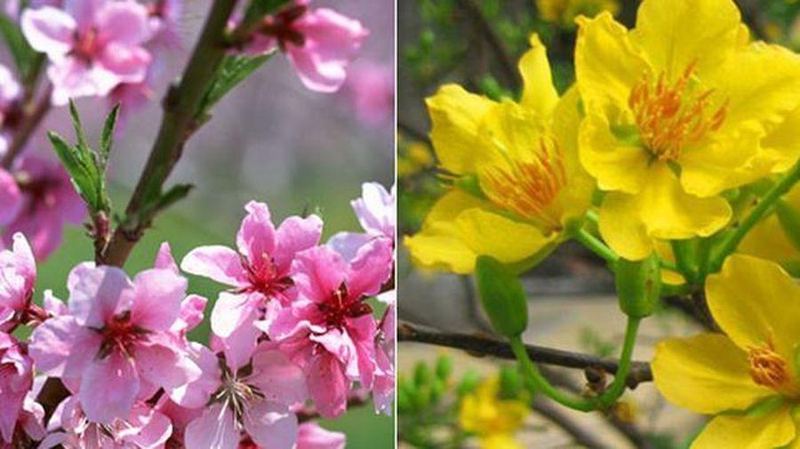 Cách chọn hoa đặt bàn thờ để thu tài nạp khí, gia đình hưng vượng