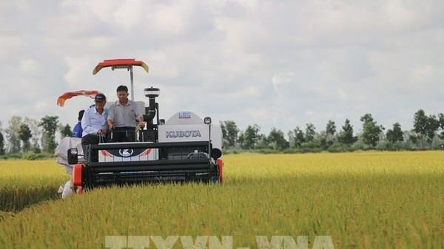 Tín hiệu tích cực từ thị trường xuất khẩu gạo