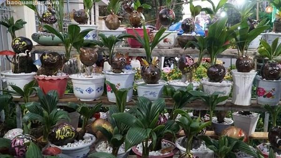 Nhiều cây cảnh độc, lạ sẵn sàng cho thị trường Tết