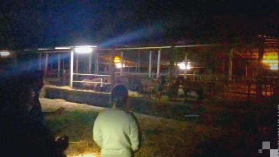 Thái Lan dẹp chợ ngựa lậu xuất sang Việt Nam