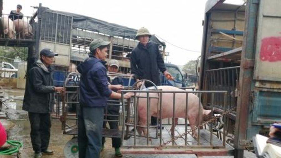 Giá lợn cao nhưng tiêu thụ chậm