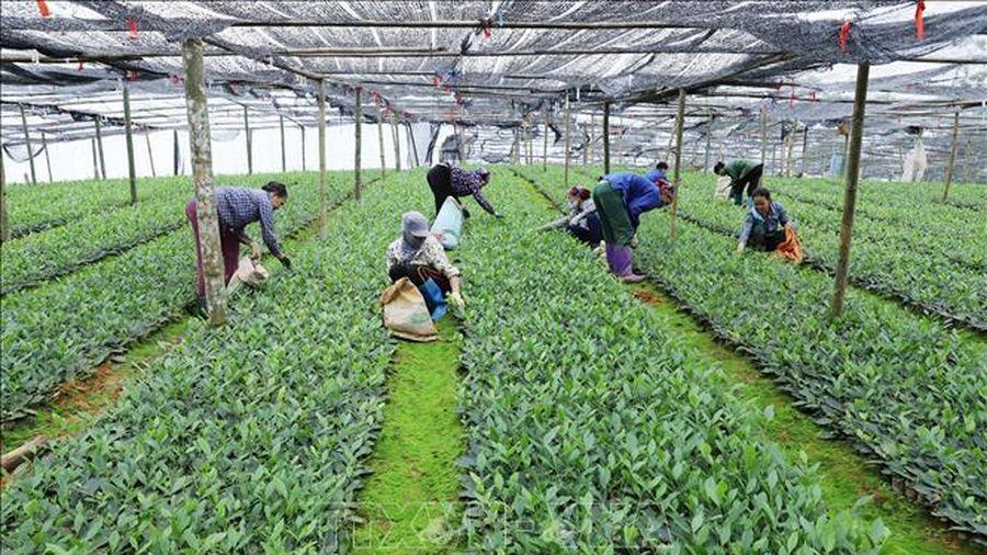 Ban hành Quy chế hoạt động của Khu nông nghiệp công nghệ cao Thái Nguyên