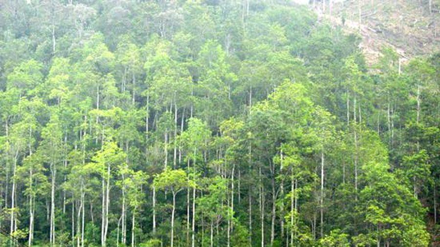 Trồng rừng trong 'Tết trồng cây' năm 2021