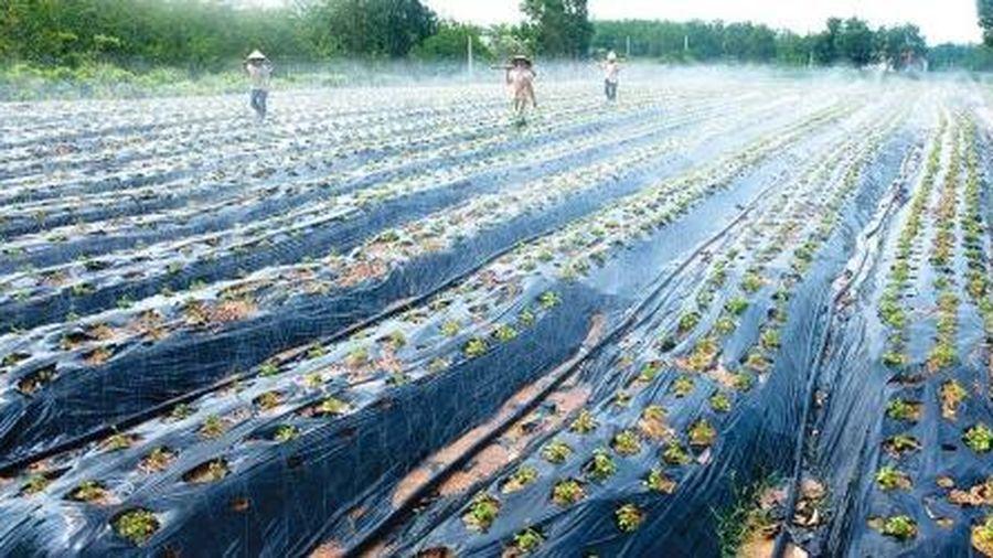 Phát triển nông nghiệp công nghệ cao: Hướng đi đầy triển vọng tại Quảng Bình