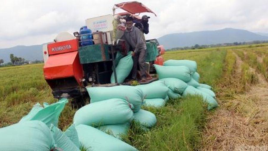Lập bản đồ nông hóa thổ nhưỡng, tăng giá trị xuất khẩu nông sản