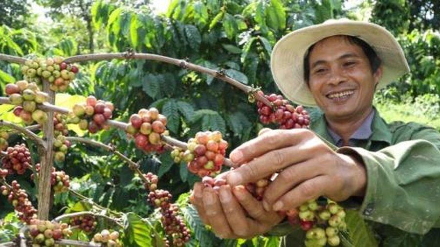 Tăng tiêu thụ cà phê nội địa để giảm áp lực xuất khẩu