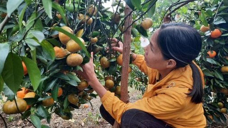 Cam Vân Đồn mở hướng cho du lịch nông nghiệp