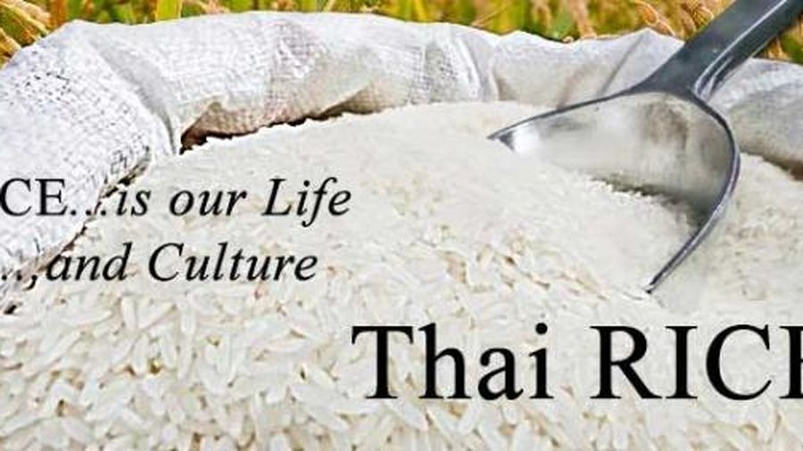 Giá gạo Thái đang cao hơn gạo Việt từ 30-40 USD/tấn