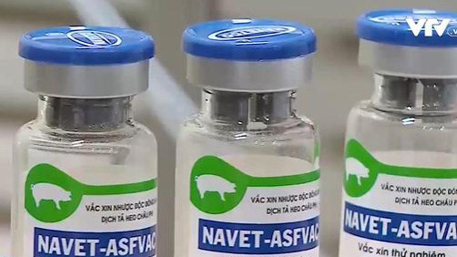Việt Nam sắp có vaccine dịch tả heo châu Phi