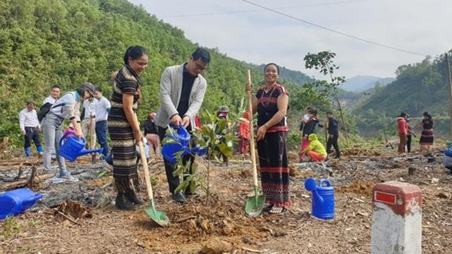 Trồng mới hơn 11.000 cây xanh giúp cải thiện sinh kế cho người dân