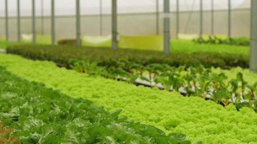Giá đất nông nghiệp Đà Lạt 'sốt' lên 70 triệu đồng/m2?