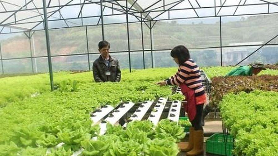 Thành lập Khu nông nghiệp ứng dụng công nghệ cao Thái Nguyên từ 15/1