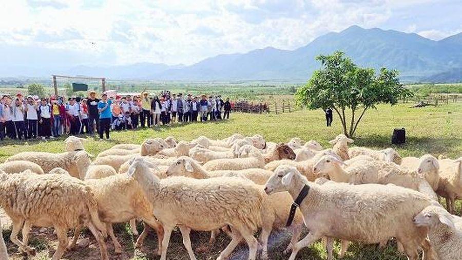 Trường THCS Âu Cơ tổ chức cho học sinh trải nghiệm tại Nông trại The Moshav Farm