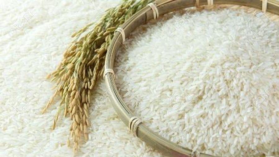Giá gạo sẽ tiếp tục giữ vững ở mức cao trong tháng 1