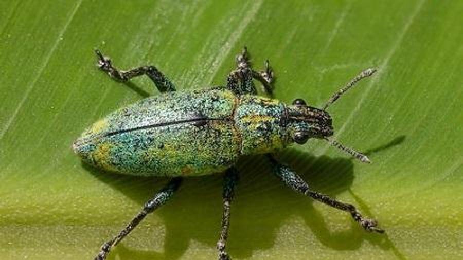 Số lượng côn trùng giảm nghiêm trọng