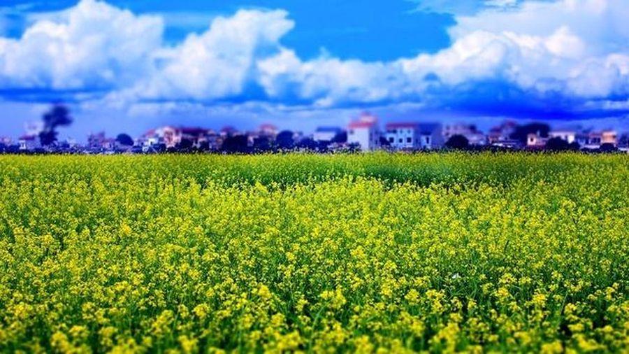 Quảng Bình: Tổ chức Lễ hội hoa Quốc tế hơn 100 triệu USD