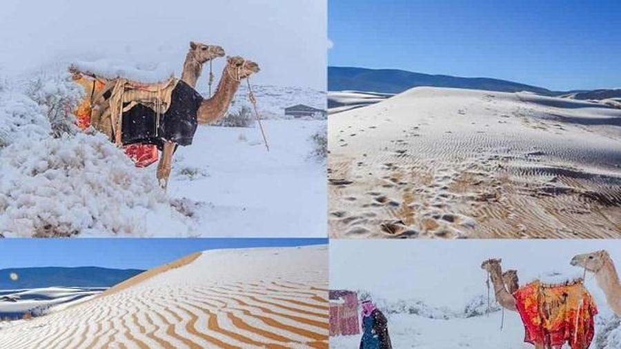 Hình ảnh lạ lùng: Tuyết phủ trắng sa mạc Sahara
