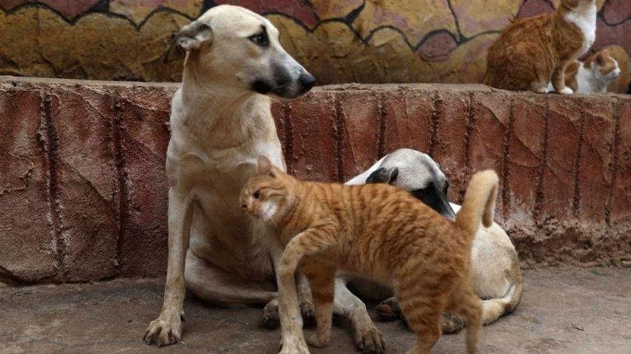 Hậu Covid-19: Nhiều thú cưng có thể 'bị bỏ lại phía sau'?