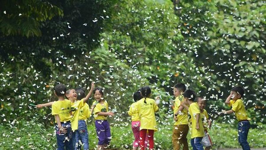 Chuỗi hoạt động tại Vườn quốc gia Cúc Phương hút khách tham quan dịp Tết Tân Sửu