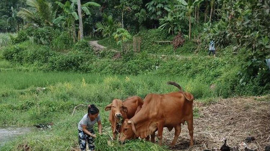 Hiệu quả từ Dự án Nhân rộng mô hình giảm nghèo ở huyện Bá Thước