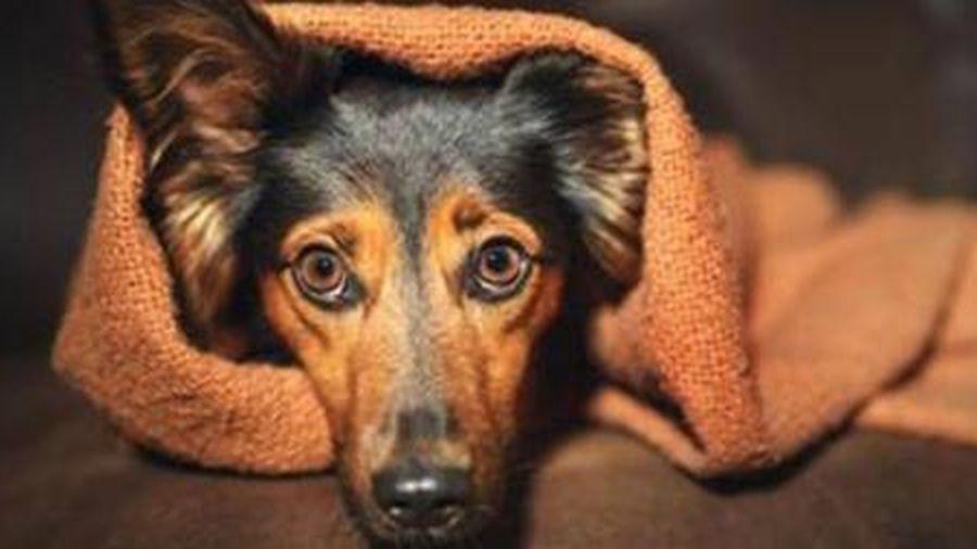 Hành vi ngược đãi động vật bị kết án tù