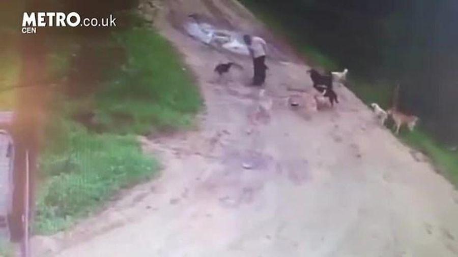 Nga: Người đàn ông bị chó hoang tấn công và ăn thịt