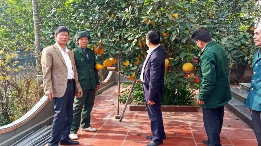 'Sống khỏe' nhờ trồng bưởi theo hướng hữu cơ