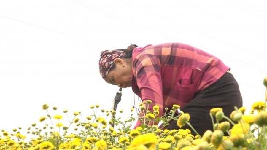 Hưng Yên đánh giá thổ nhưỡng phục vụ chuyển đổi cơ cấu cây trồng