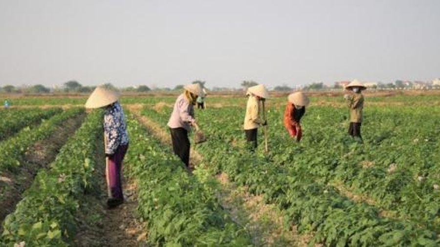 Tích tụ đất sản xuất: Về quê, gặp nông dân đại điền say mê đồng ruộng!
