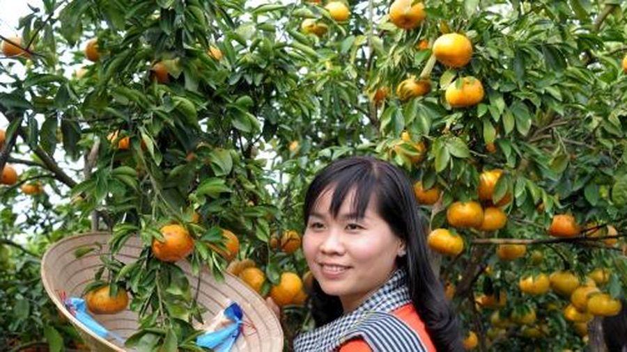 Cận tết hàng ngàn người đổ về vườn quýt hồng Lai Vung để check in