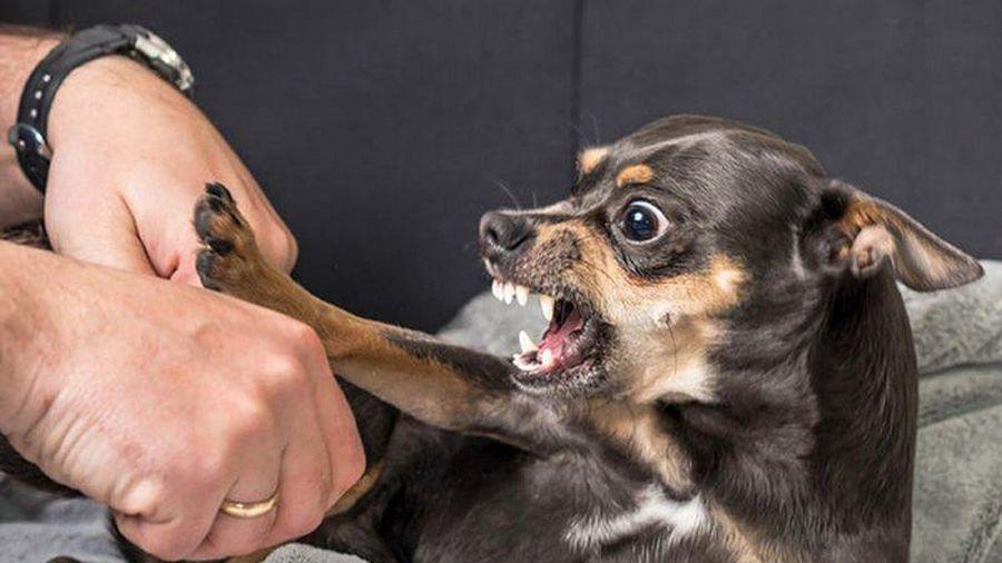Chuyên gia Mỹ hướng dẫn cách thoát thân khi gặp... chó dữ