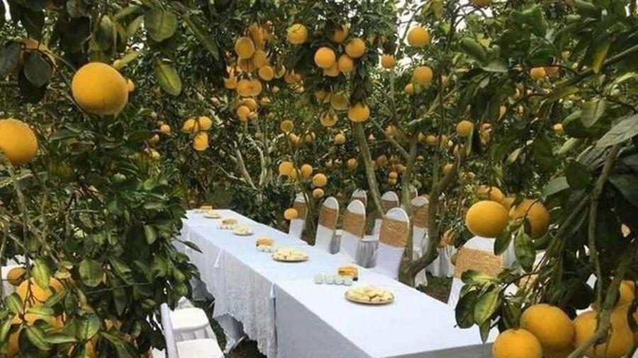 Sự thật đám cưới trong vườn bưởi sai trĩu quả đang 'gây sốt' mạng