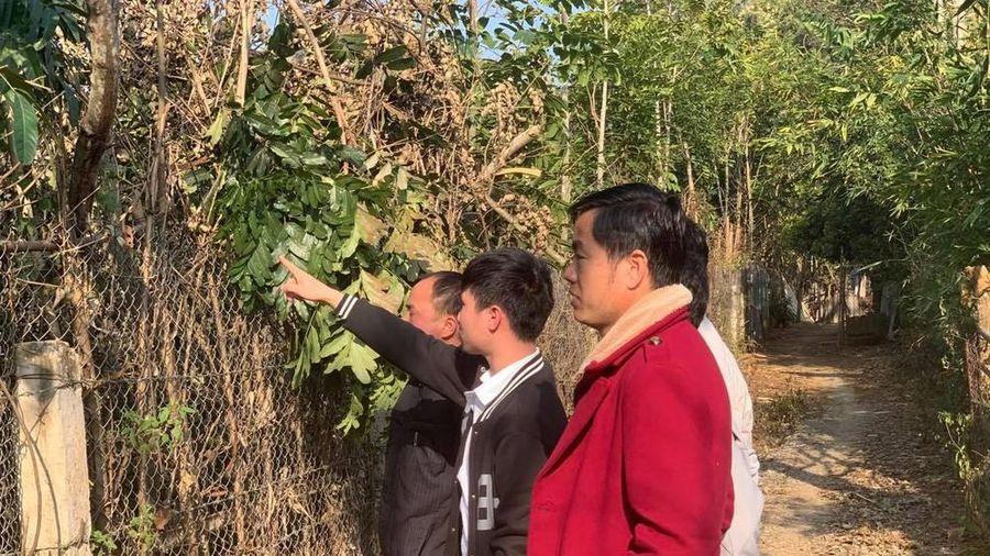 Dự án nghĩa trang gần ĐH Tây Bắc: Bộ GD&ĐT đề nghị UBND tỉnh Sơn La đánh giá tác động toàn diện