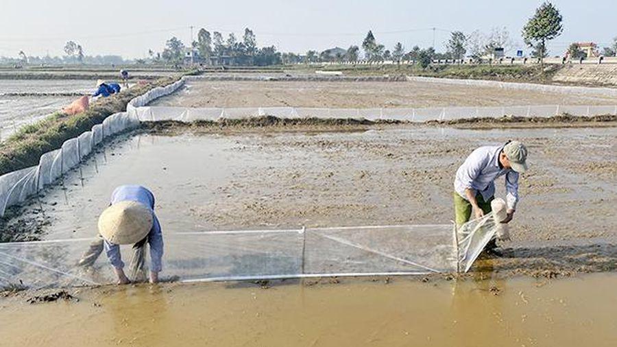 Hà Tĩnh đã gieo cấy 10.983 ha lúa vụ xuân