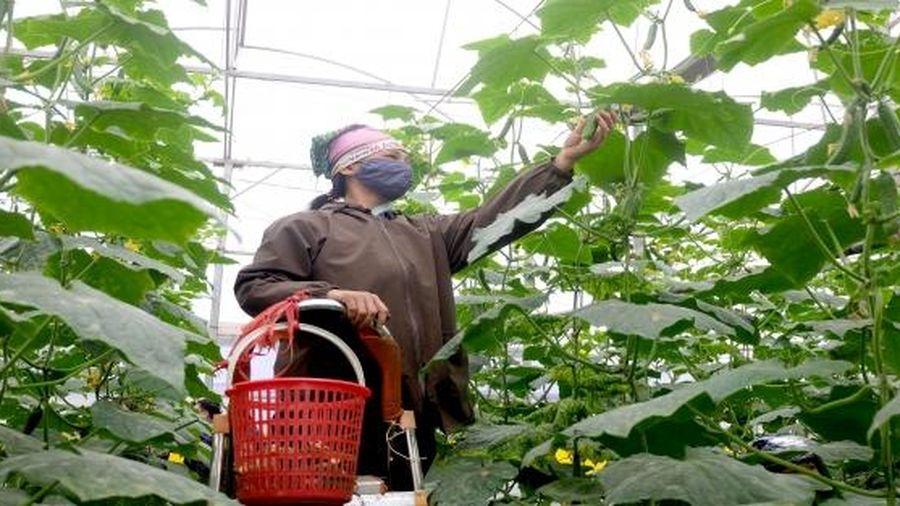 Bài 3: Ứng dụng công nghệ cao để nâng cao hiệu quả sản xuất nông nghiệp