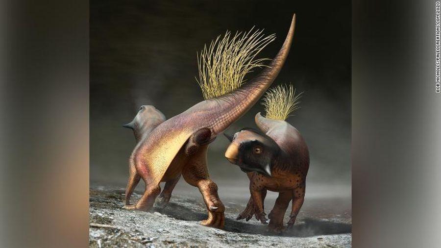 Hóa thạch tiết lộ cách khủng long giao phối