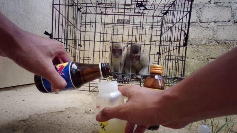 Ép khỉ ăn tương ớt, uống nước tăng lực để 'câu view rẻ tiền', Youtuber khiến CĐM phẫn nộ
