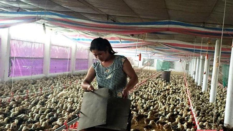 Xã Quý Lộc đẩy mạnh phát triển chăn nuôi theo hướng tập trung