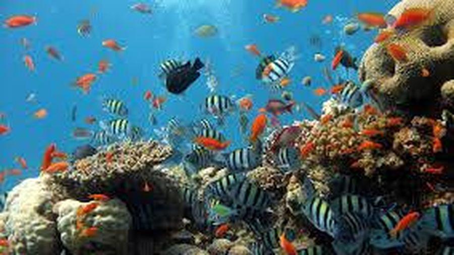Hợp tác quốc tế trong bảo tồn, quản lý tài nguyên cá