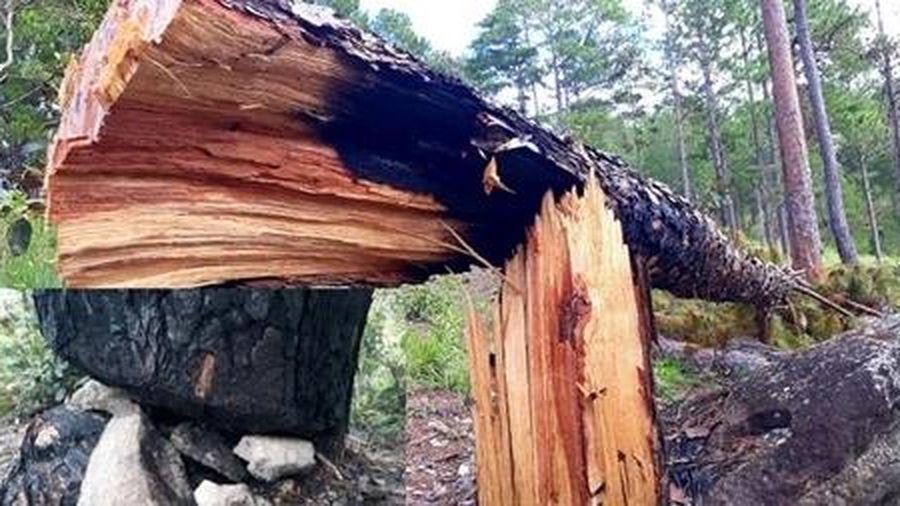 Chấm dứt dự án sân golf để mất rừng do Báo CAND phản ánh