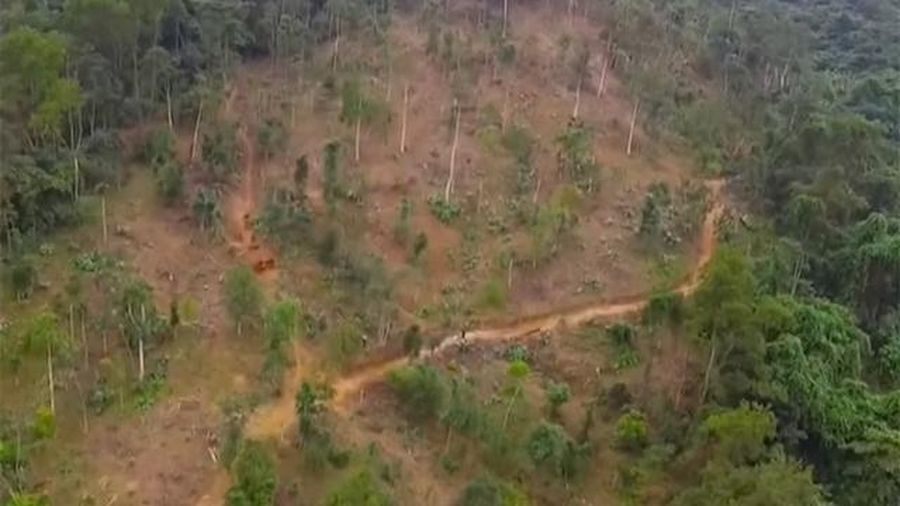 Khởi tố, bắt tạm giam 4 tháng hai cán bộ Ban Quản lý rừng phòng hộ huyện Quỳ Hợp