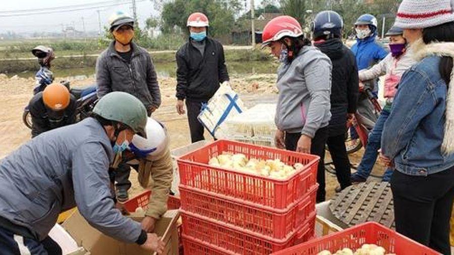 Trao 37.000 con gà giống cho nông dân Quảng Bình