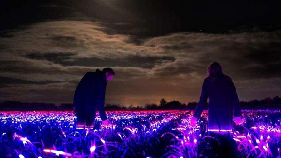 Sắp đặt ánh sáng trên cánh đồng