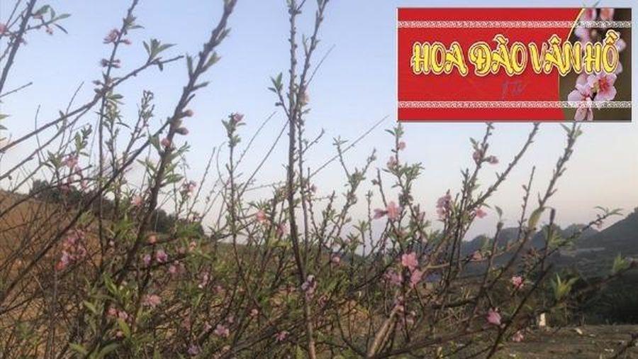 Sơn La phát hành tem xác nhận nguồn gốc cây đào trồng