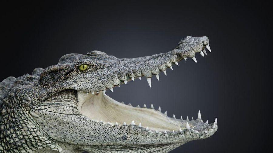 Kỳ lạ cá sấu không hề có sự thay đổi đáng kể trong vòng 200 triệu năm qua