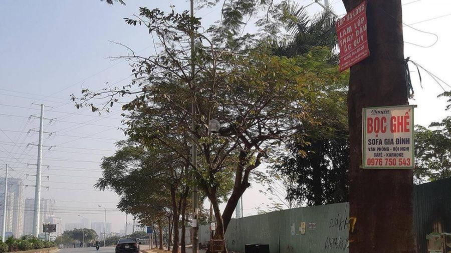 Phản cảm rác quảng cáo tơi tả... trên cây
