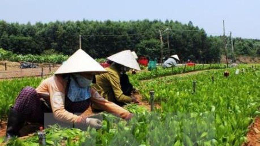 Dự kiến cắt giảm thêm 101 dòng hàng nông nghiệp phải kiểm tra chuyên ngành nhập khẩu