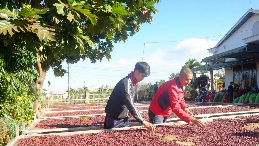 EVFTA giúp xuất khẩu cà phê vào Bắc Âu được hưởng lợi