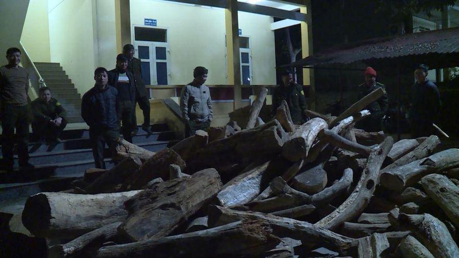 Hà Giang: Phát hiện, tạm giữ 6,19m3 gỗ Bách xanh