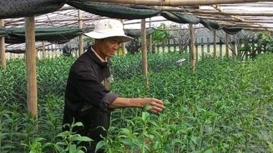 'Hồi sinh' những vườn hoa Tết xứ Huế